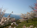 [風景・景観][空][桜]