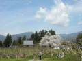 [花][桜][風景・景観]松源寺(長野県下伊那郡高森町)