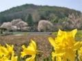 [風景・景観][花]光輪寺(長野県朝日村)
