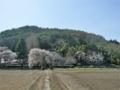 [風景・景観][桜][神社・仏閣]光輪寺(長野県朝日村)