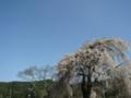 [風景・景観][桜][空]光輪寺(長野県朝日村)