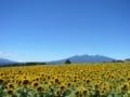 [風景・景観][空][花]明野サンフラワーフェス