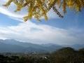 [風景・景観][紅葉][空]長福寺の大銀杏