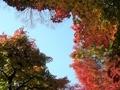 [紅葉]温泉寺(長野県諏訪市)