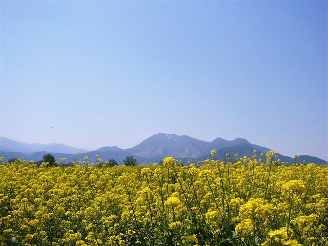 道の駅 花の駅千曲川から(長野県飯山市)