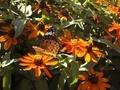 [花]池田町クラフトパーク(長野県北安曇郡池田町)