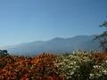 [風景・景観][空][山][花]池田町クラフトパーク(長野県北安曇郡池田町)