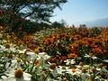[風景・景観][花]池田町クラフトパーク(長野県北安曇郡池田町)