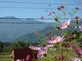 [風景・景観][山][空][花]安曇野ちひろ公園(長野県北安曇郡中川村)