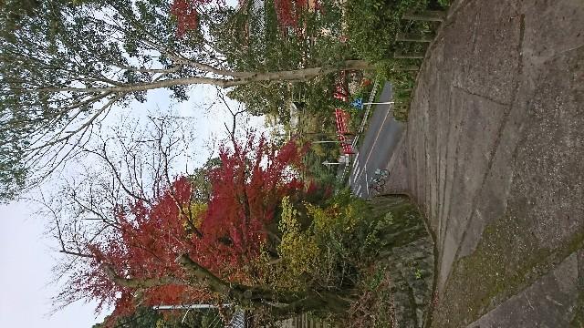 f:id:a-chankana:20181201185407j:image