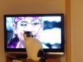 今見ているテレビ(録画)