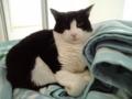 2月22日は猫の日だから猫画像222枚貼るよ