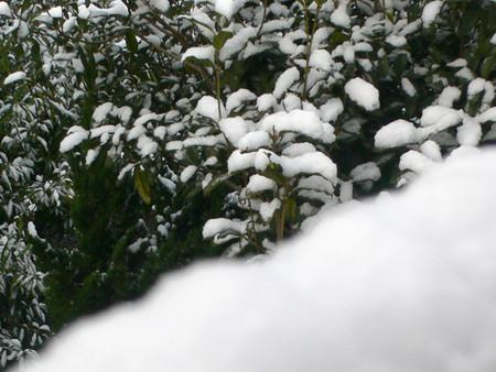 Last Snow ?
