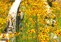 Plains Coreopsis