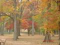 Public Park in Ridgewood
