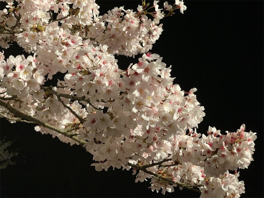 f:id:a-ishida:20190413083843j:image