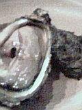 2009年7月24日の夕飯