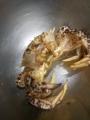 [料理]クリガニ