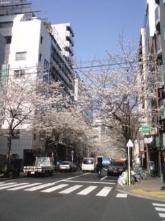 桜・茅場町3