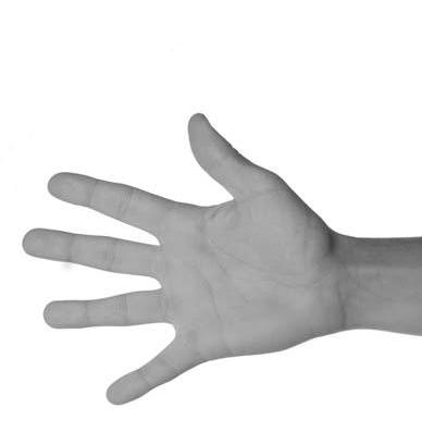 手のひらは前腕の先にまっすぐ付いている