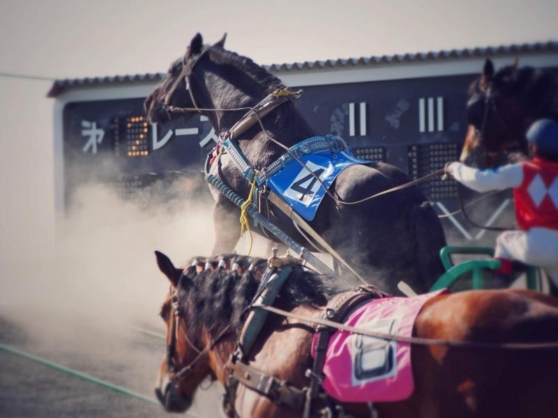 ばんえい競馬の最大の見せ場であるばん馬が坂を上るシーン