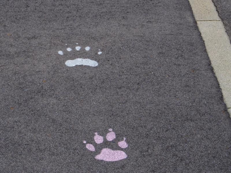 ぬかびら温泉郷の主要施設を案内する動物の足跡