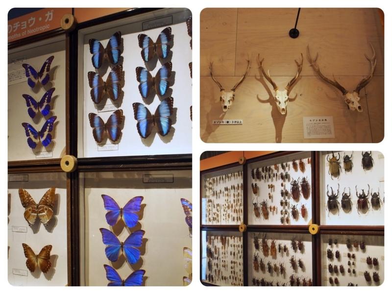 ひがし大雪自然館には昆虫の標本などが展示されている