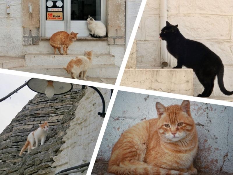 散歩中に出会うアルベロベッロの猫たち