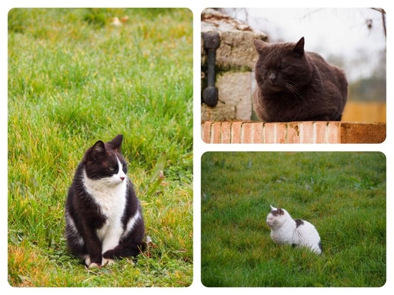 ヴェネツィア本島周辺の猫が多い島、トルチェッロ島