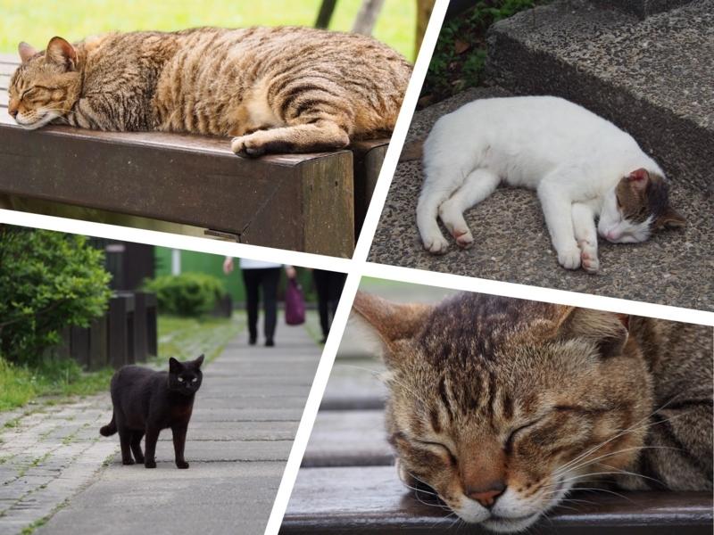 台湾の猫村、猴硐駅正面側の猫