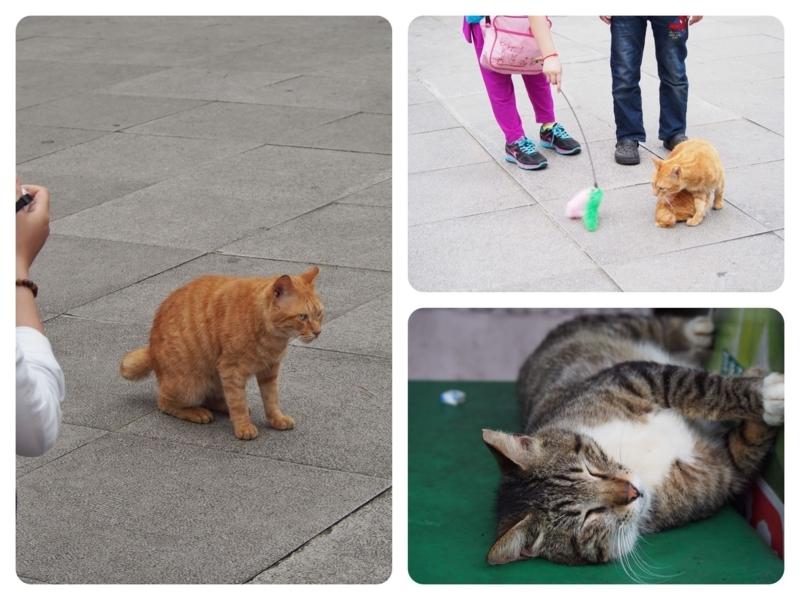 台湾の猫村、猴硐駅正面の広場の猫