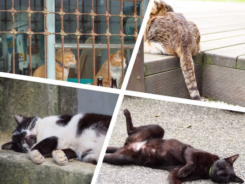 台湾の猫村、猴硐駅の裏手側の猫