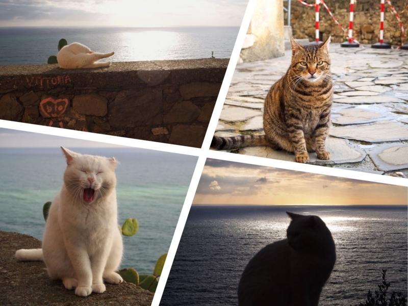 チンクエ・テッレのコルニリアにいた白い猫