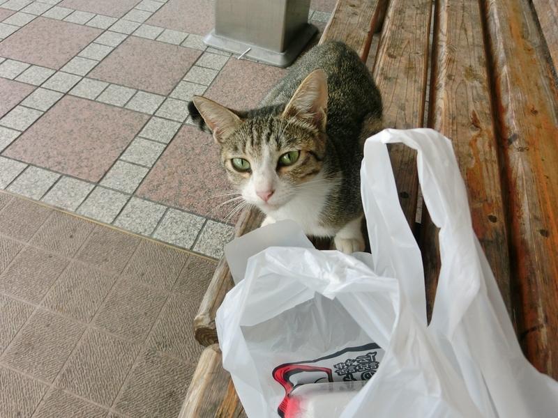 高千穂の道の駅で食べ物をねだる猫