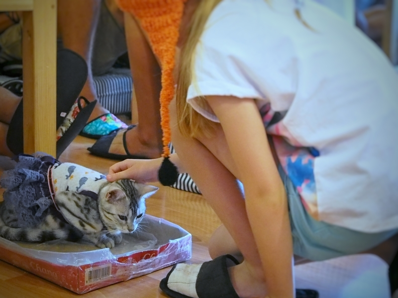 チェンマイにある猫カフェ、キャトマスフィア(Catmosphere)の少女に撫でられている猫