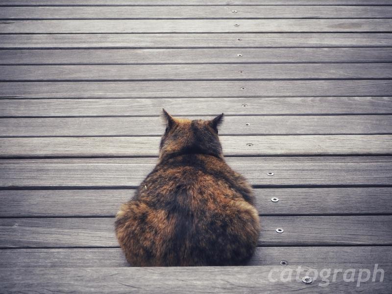 鹿児島市桜島の溶岩なぎさ公園にいた後ろ向きに座っている猫