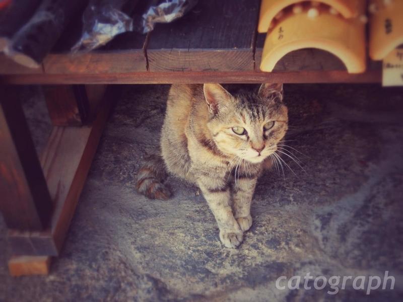 馬籠宿の古い商店の前にある木製の陳列台の下からカメラに目を向ける猫