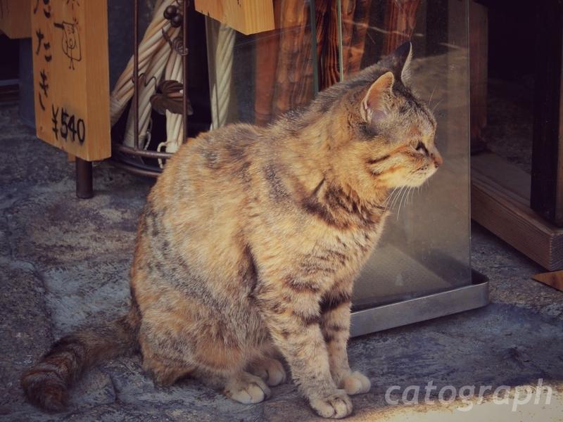 馬籠宿の古い商店の前でたたずむ猫