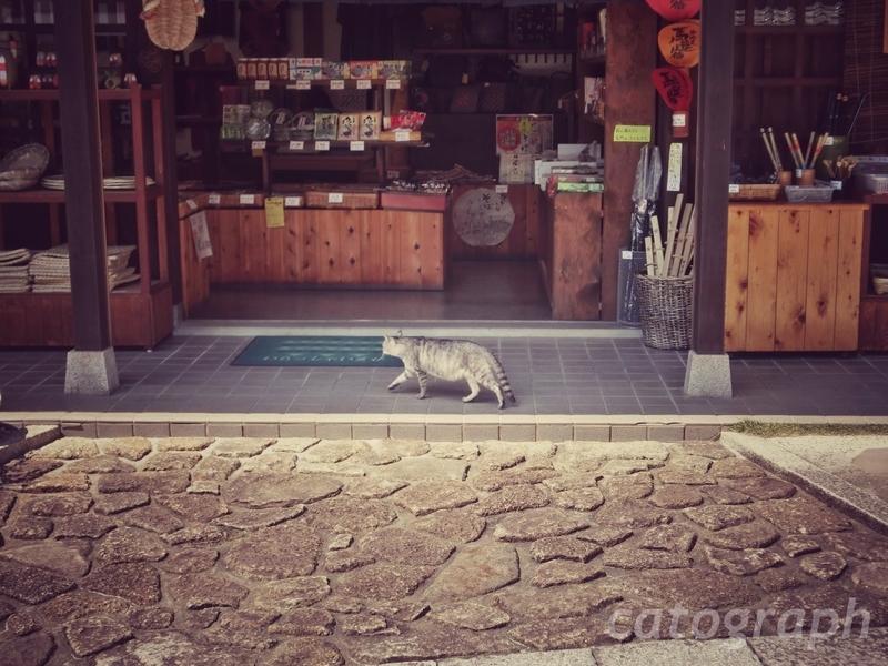 馬籠宿の古い商店の前をうろつく猫