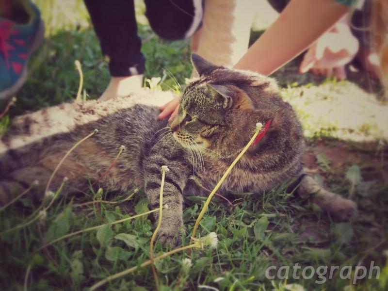 子供たちのもふもふが終わり、立ち上がろうとするスオメンリンナ島の猫