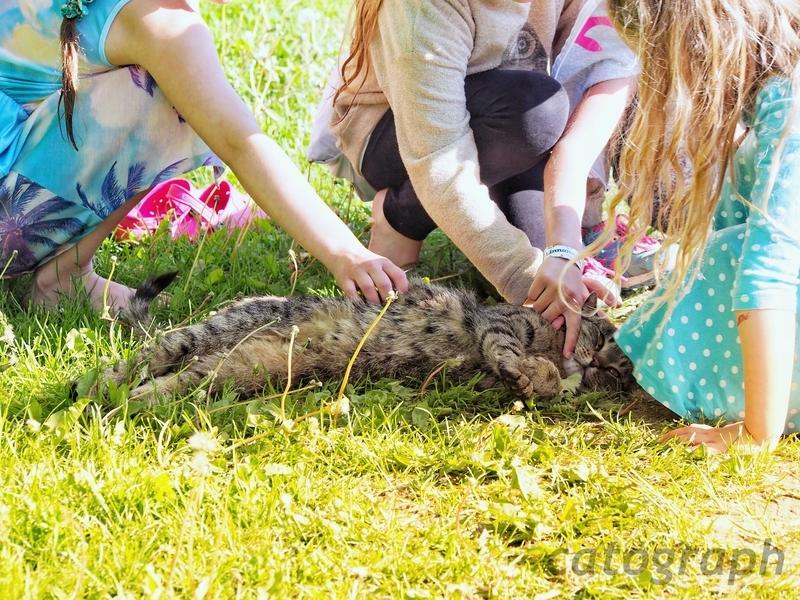 子供たちに囲まれて、もふもふされるヘルシンキのスオメンリンナ島の猫