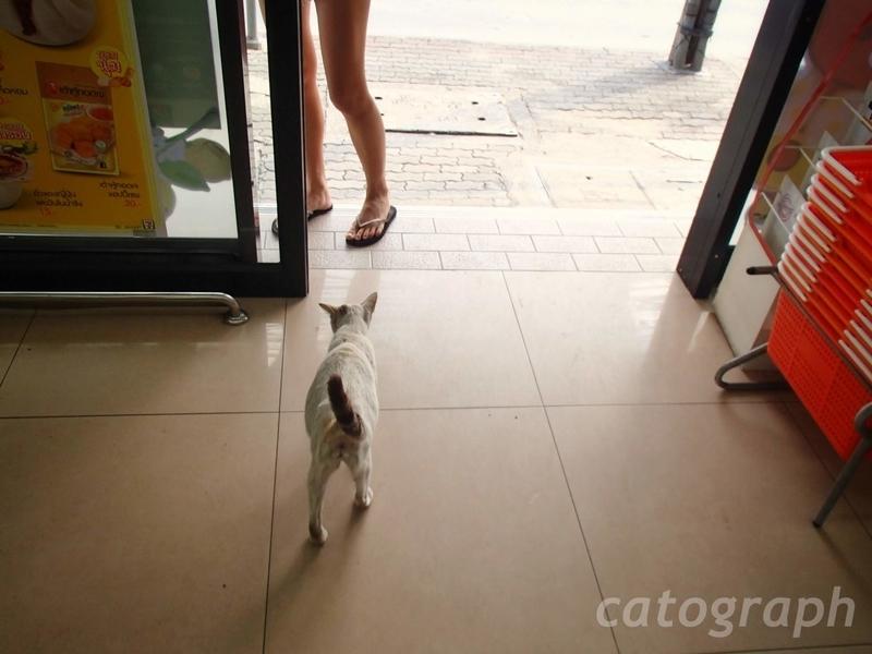 バンコクのセブンイレブンで寝そべっていた猫が店から出て行く