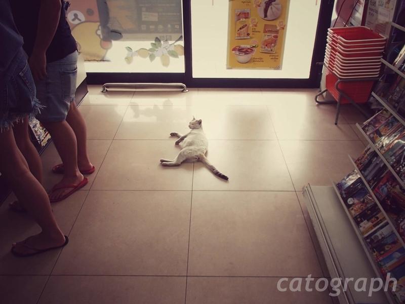 バンコクのセブンイレブンの入口に猫が寝そべっていて、思わず踏みそうになる