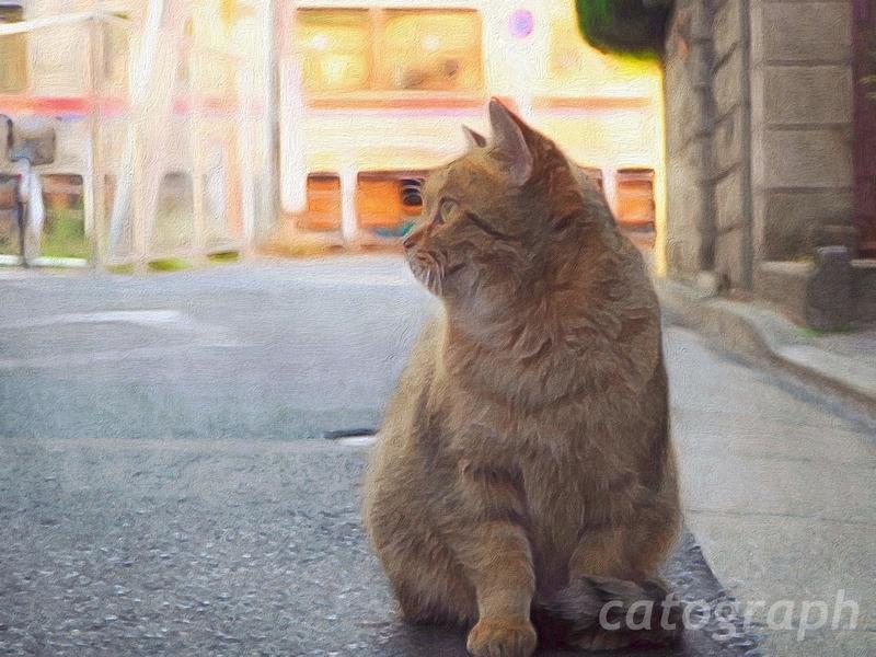 映画「寅さん」で有名な柴又に住む野良猫が座っている横を向いている様子。後ろを京成電車が通っている