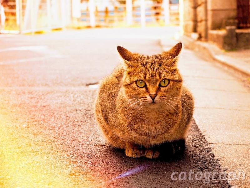 映画「寅さん」で有名な柴又に住む野良猫が座っている様子