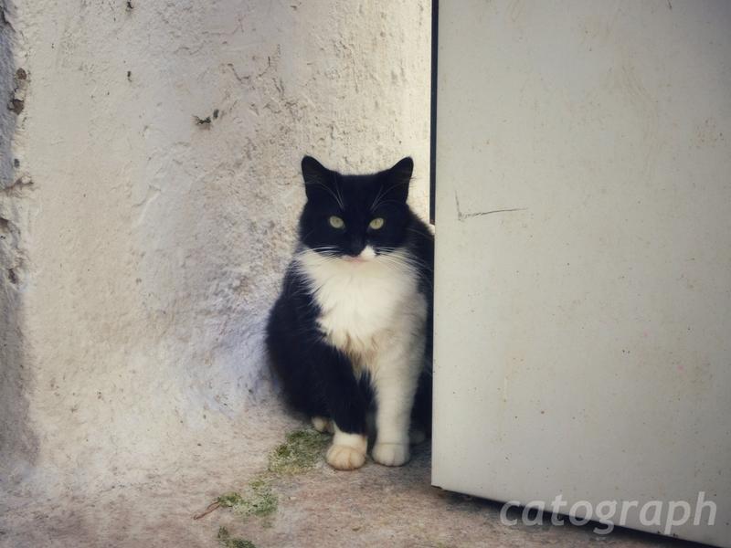 ギリシャのミコノス島で行儀よく私を見つめる顔が黒い猫