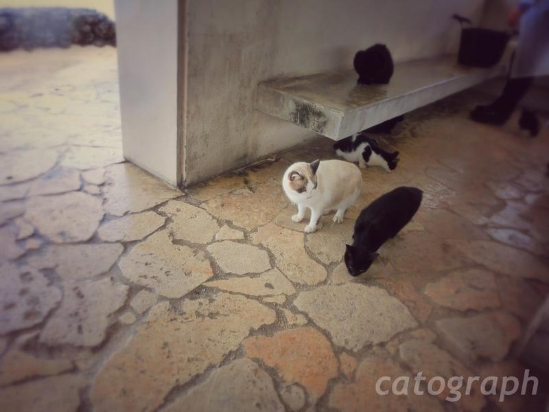 沖縄県竹富島のコンドイビーチにある東屋のような休憩所で雨宿りする猫たち