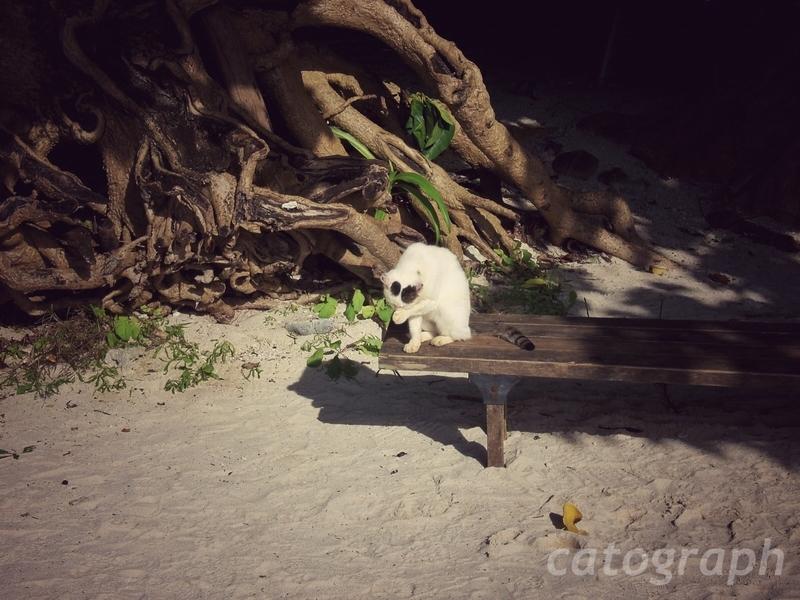 竹富島にあるカイジ浜にいたベンチでくつろいでいる猫