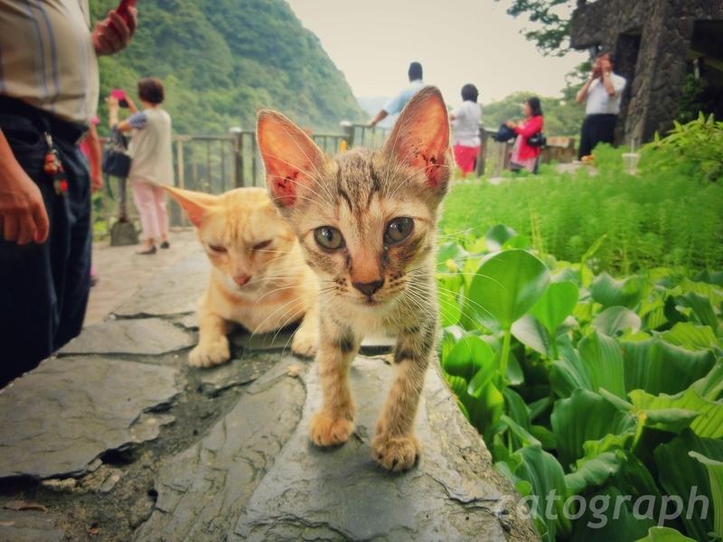 新北市の十分瀑布にいた耳が大きな猫
