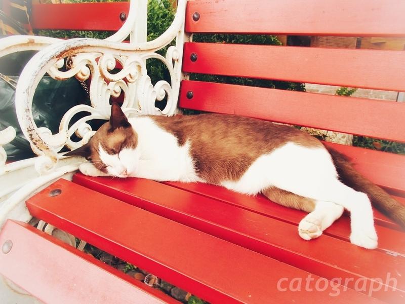 タイのラチャブリー県スワンプンにあるシナリー・ビンテージ・ファームの入口まどろむ猫を近くで撮った様子
